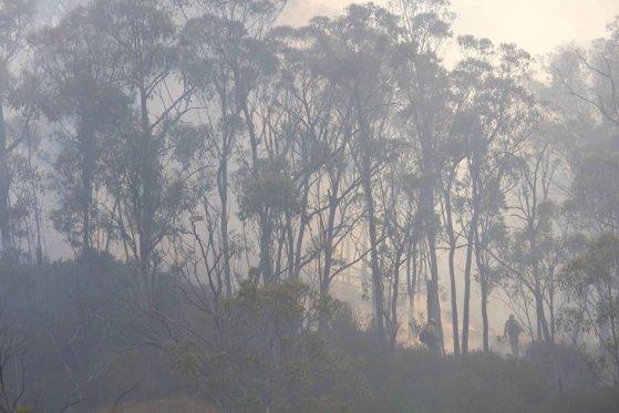"""NASA avertizează: Fumul de la incendiile din Australia va face """"un tur complet"""" în jurul lumii"""