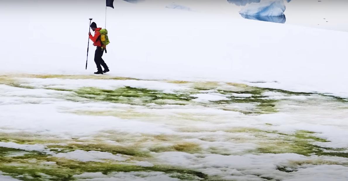 VIDEO|Fenomen ciudat în Antarctica: zăpada a devenit verde