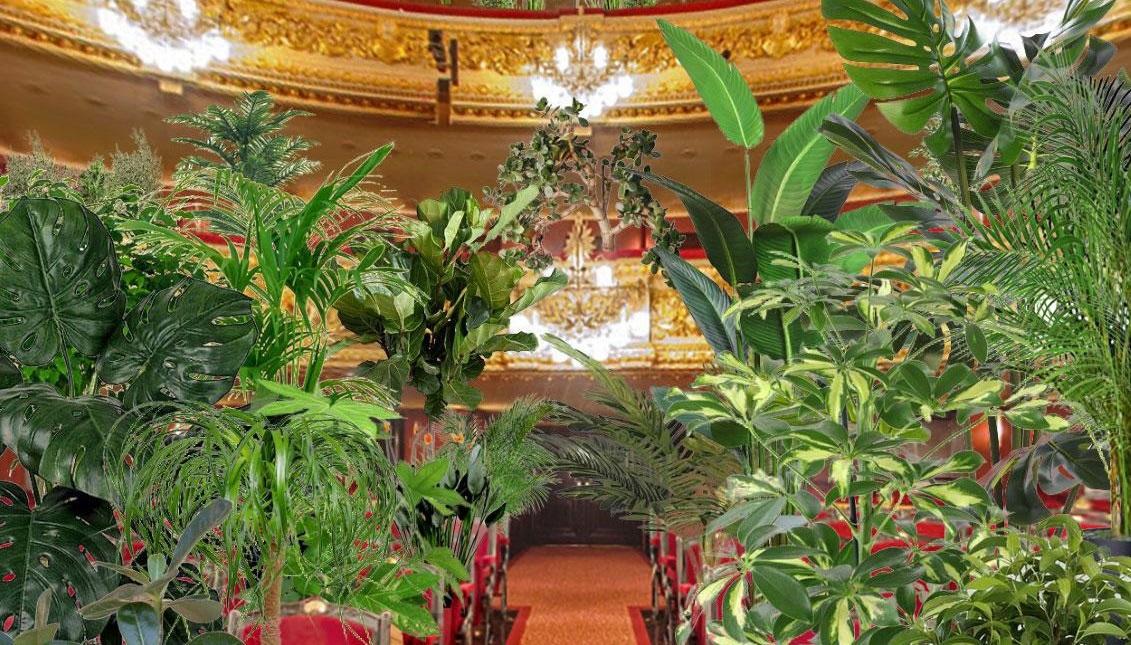 """Teatrul de operă """"El Gran Teatre del Liceu"""", din Barcelona, înlocuiește oamenii cu plante"""