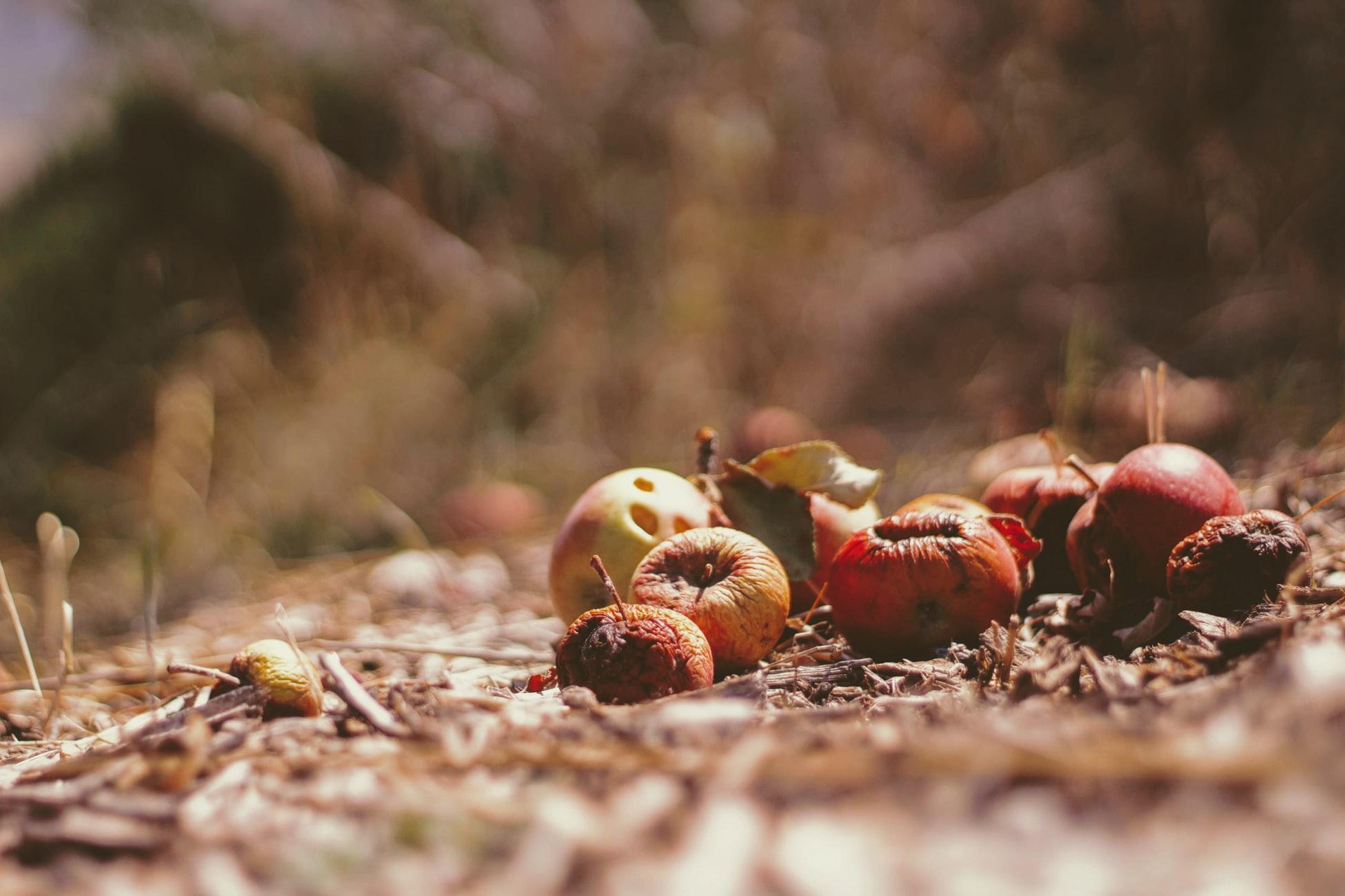 Google se folosește de Inteligența Artificială pentru eliminarea deșeurilor alimentare și pentru a-i hrăni pe cei flămânzi