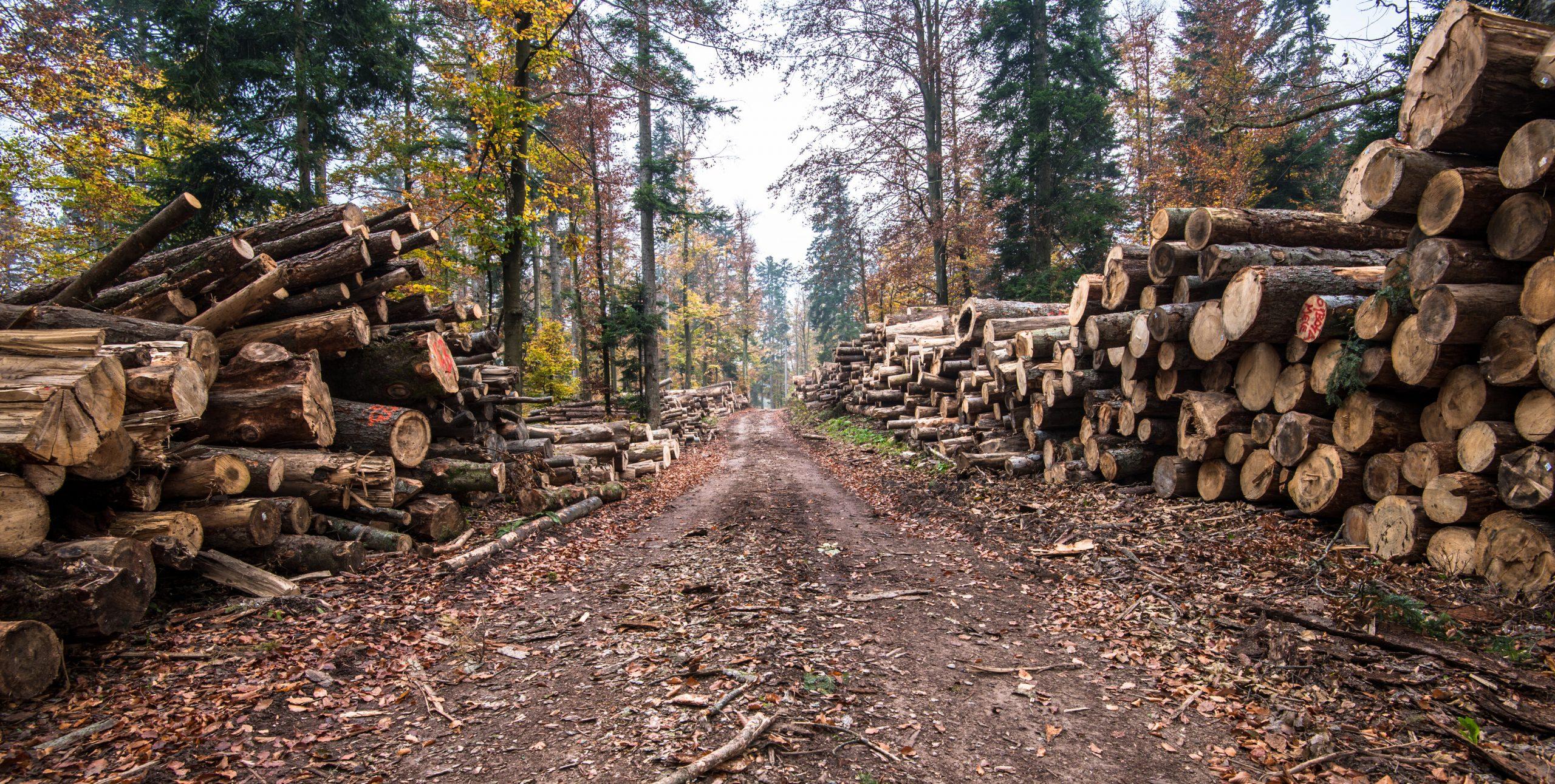 Pădurile din România sunt amenințate de tăierile masive. IKEA deține 50.000 de hectare de pădure, iar noi importăm lemn din Bulgaria