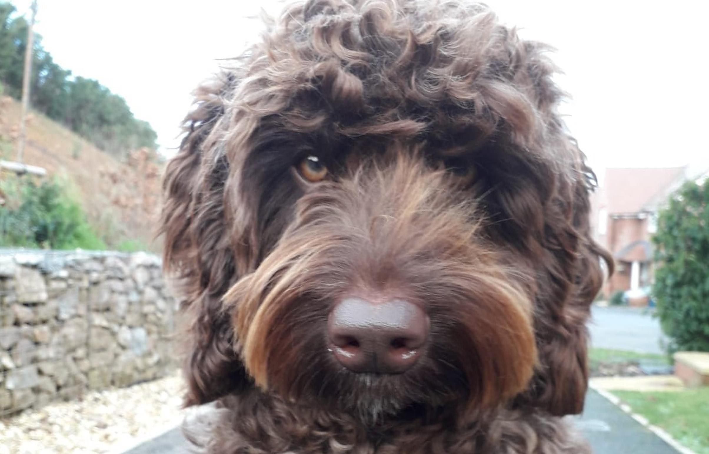 """Câinele """"negociator"""" Digby salvează o femeie care voia să se sinucidă aruncându-se de pe un pod"""