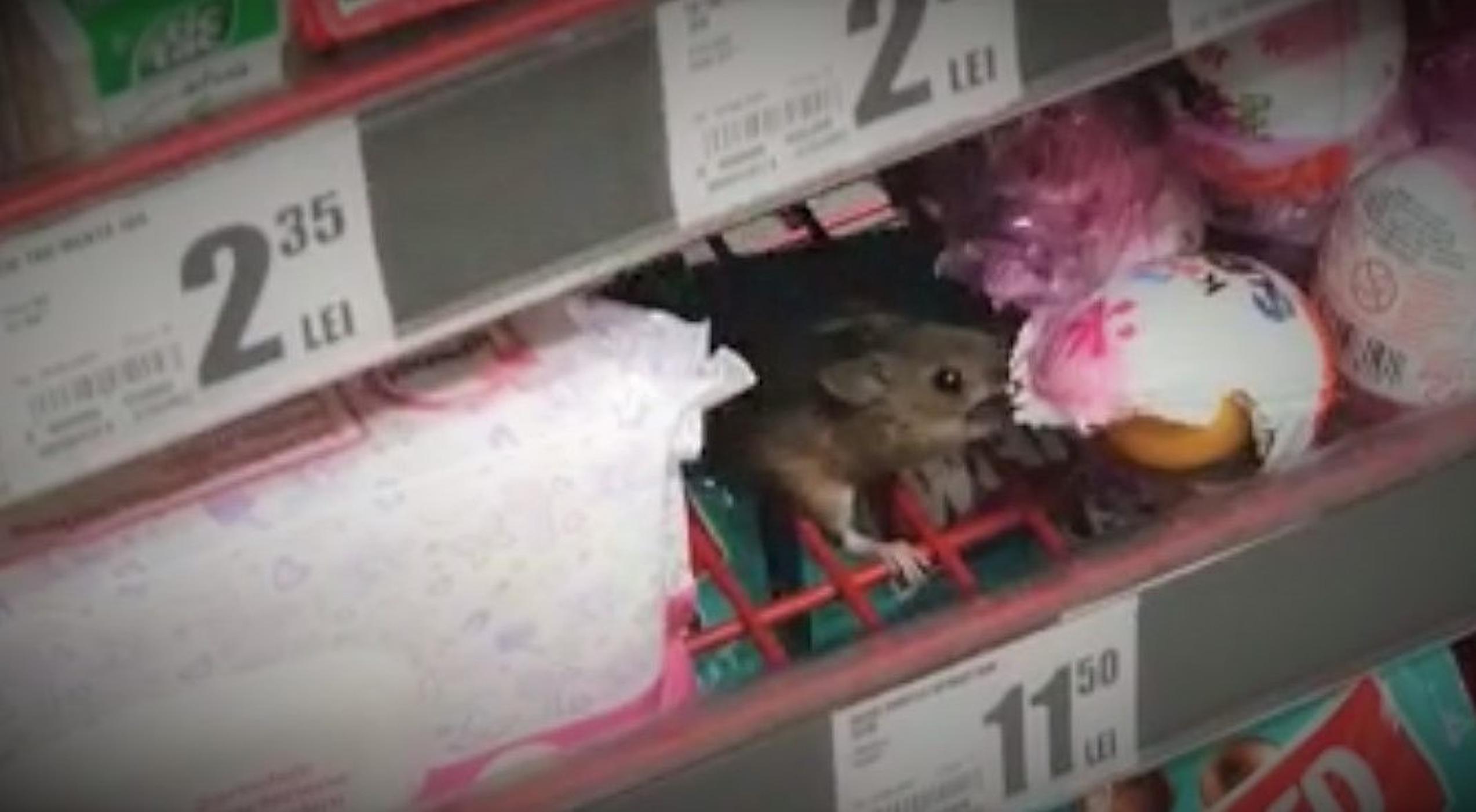VIDEO| Șoarecele de ciocolată. Rozătorul a fost surprins într-un hypermarket din Cluj în timp ce mânca dulciuri