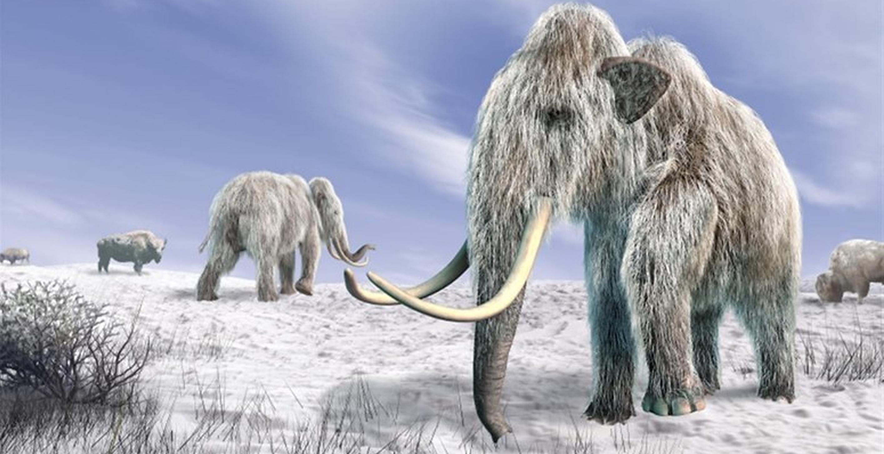Americanii clonează mamuți lânoși, animale dispărute acum 4.000 de ani