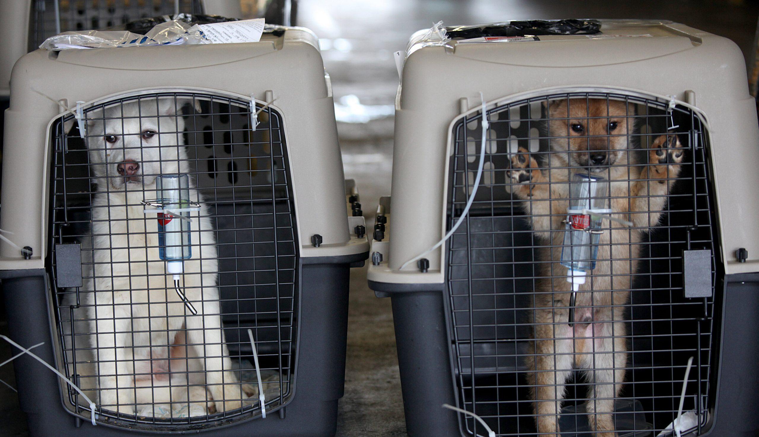 Consumul de carne de câine trebuie oprit, spune președintele sud-coreean. 1 milion de câini sunt sacrificați anual în Coreea de Sud